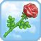 Rosa di Afrodite