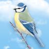 Giocare e occuparsi  di un uccello