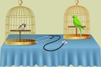Occupati degli uccelli nel centro di cure o nella clinica veterinaria, fa sì che avanziono nel gioco  grazie agli altri allevatori di uccelli  nel parco ornitologico...