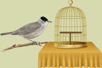 Gli uccelli abbandonati